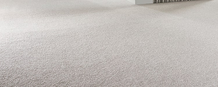 Microorganisms in Your Carpet Are Harmful