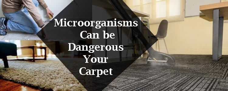 Microorganisms Can be Dangerous For Your Carpet